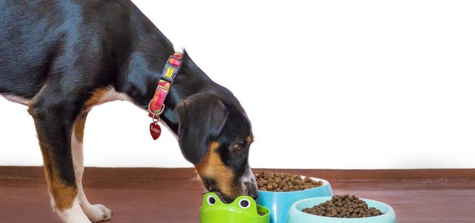 Les différentes sortes de croquettes pour chien