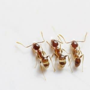 Tout connaître sur les fourmis